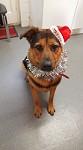 Dorset Dog Rescue