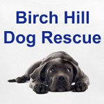 Birch Hill Dog Rescue