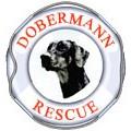Dobermann Rescue Limited