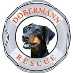 Dobermann Rescue Limited